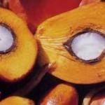 пальм. плоды
